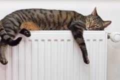 La chaleur des radiateurs est approuvée !